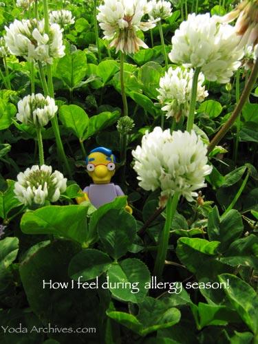 milhouse_allergy